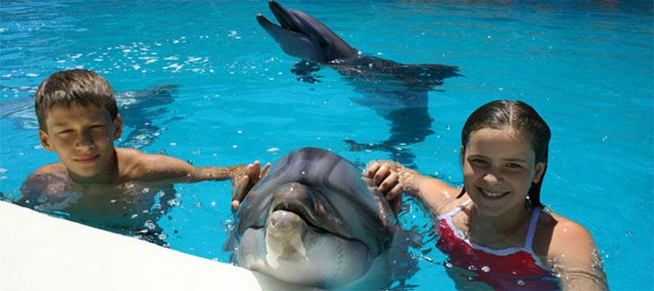 Дельфинотерапия в Крыму